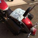 大学生の頃。マンションにて、よく私のバイクの上で、ボロボロの老猫が休んでおりました。毎日毎日シートを…