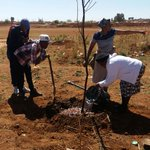 Our https://t.co/nrczTIwCdk team at Orange Farm, #Johannesburg planted drought resistance Rhus Lancea trees on Church grounds for the #seasonofcreation