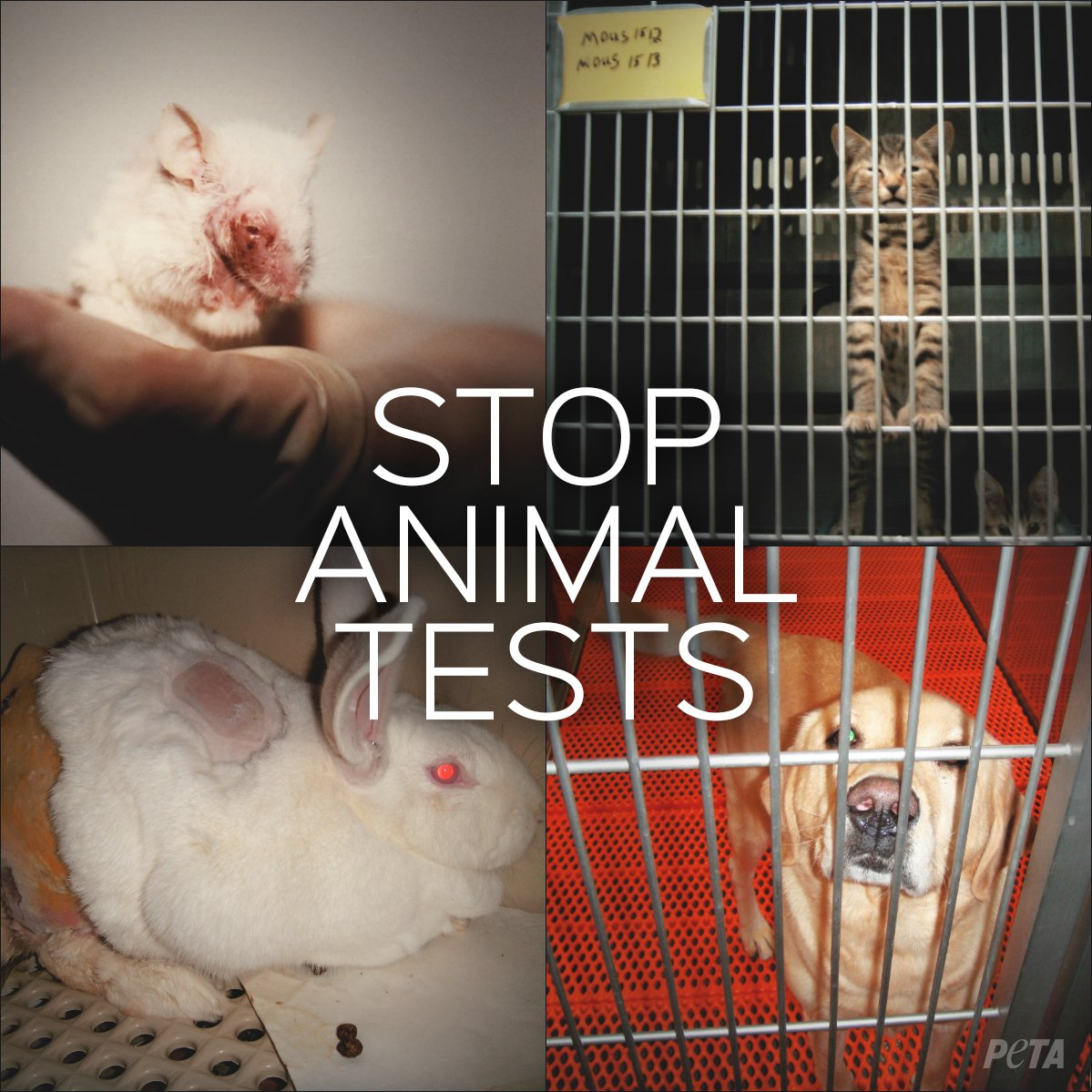 animal testing should be stopped Varity of different argument have been put forward about this issue but it is strongly agreed by most of the community that experiment on animals should be stopped scientist researches say that animal testing is the future to finding cures and helps them figure out what will work and not work on humans.