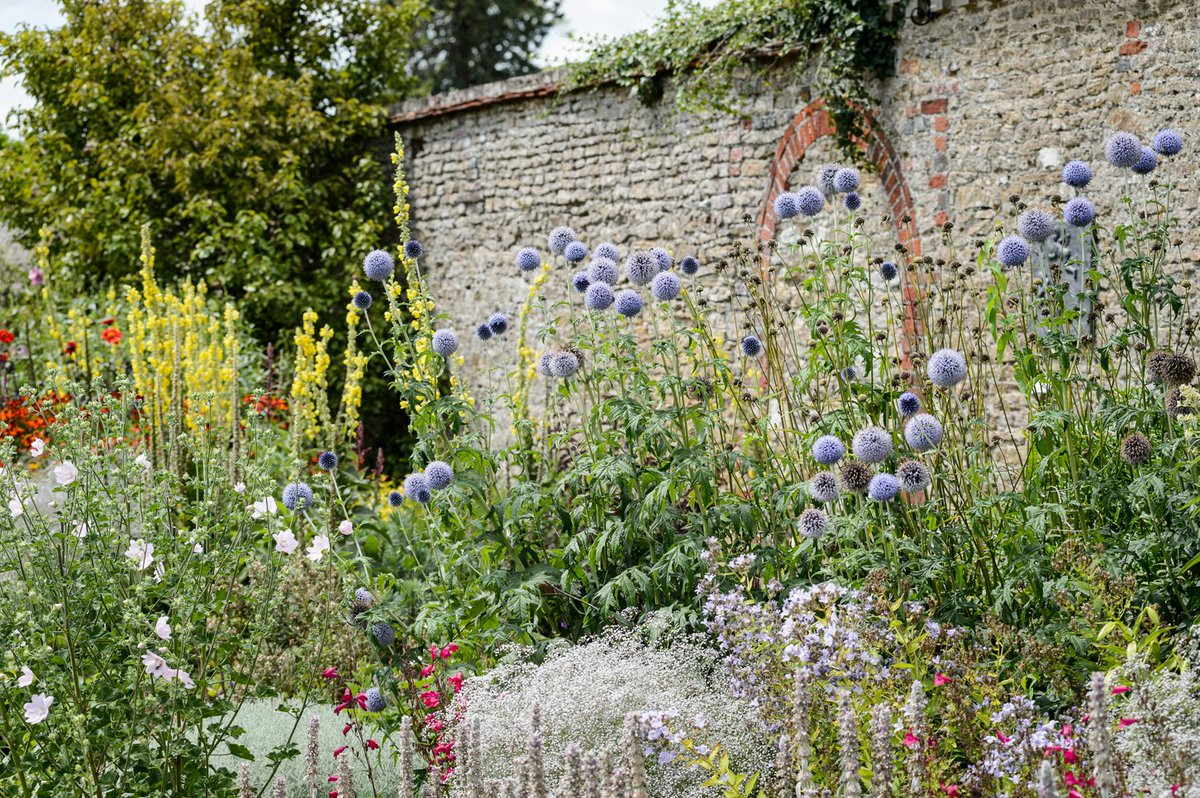 A garden is a grand teacher. It teaches patience and careful watchfulness; it teaches industry and thrift; above all it teaches entire trust. #Gertrude #Jekyll was born this day 174 years ago. Enjoy these photos of our GJ inspired border in the #walledgarden #July #September