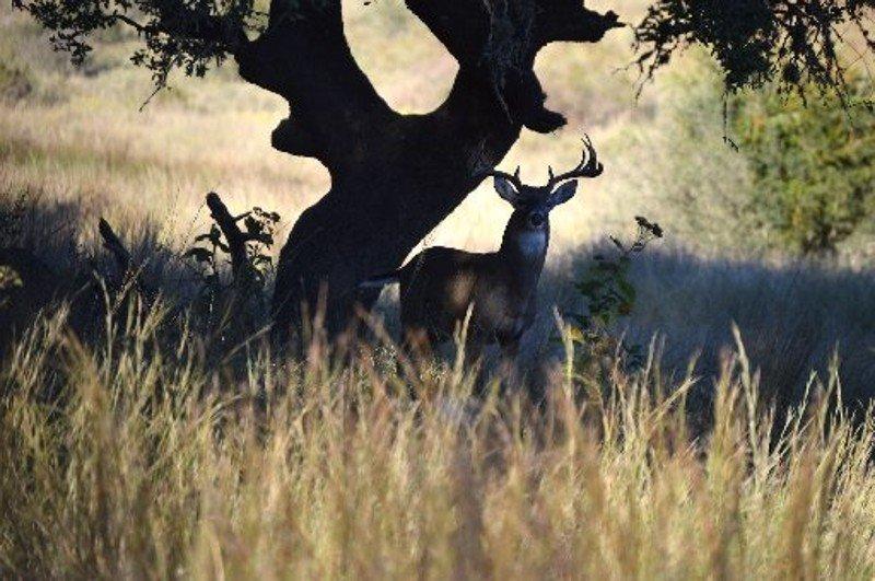 Granger man, woman accused in deer shooting on federal property https://t.co/KhpxD7nOCa