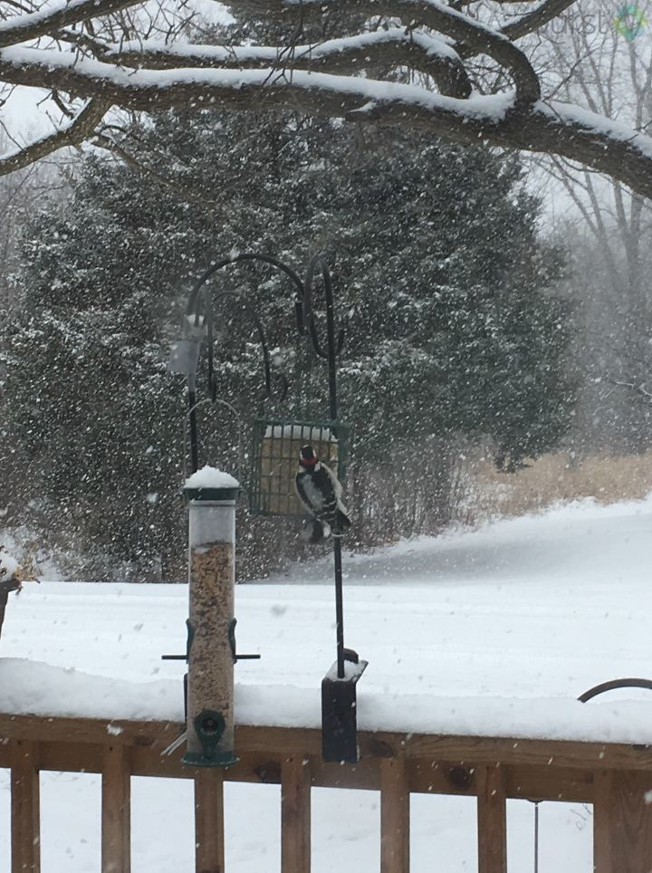 When it's not threatening your life and vehicle, the snow can be quite beautiful. Thanks to Donna Kremer from Bannister for this pic. Got a pic to share? #SeeItSendIt https://t.co/gNN8QQq4iu