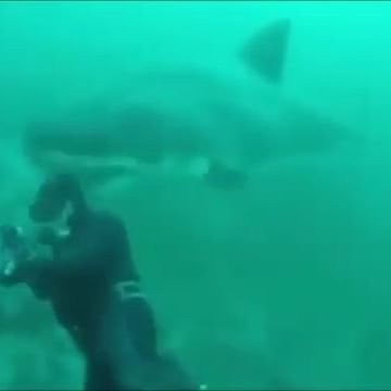 L'incontro con lo squalo bianco è spaventoso. Ecco com'è finita al sub - https://t.co/VnLHxVhjK0 #blogsicilianotizie #todaysport