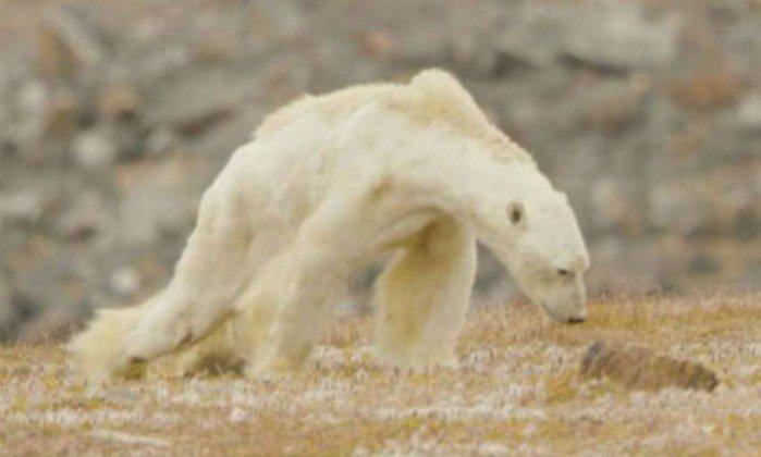 Vídeo 'devastador' mostra urso desnutrido lutando para sobreviver https://t.co/Uulw0iBQvx