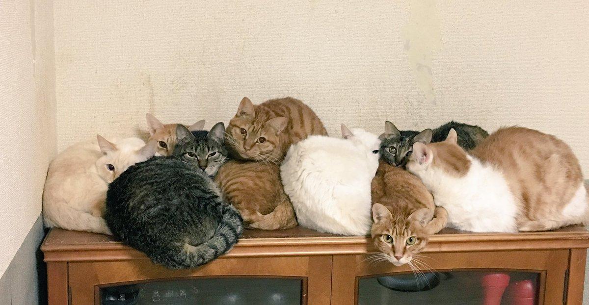 あぁあああぁあごめんて、今帰ってきたところだから、ごめんて、今すぐ暖房付けるからごめんって!!!!!!(´;Д;`)