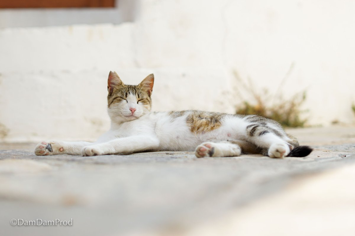 sauvage rose chatte