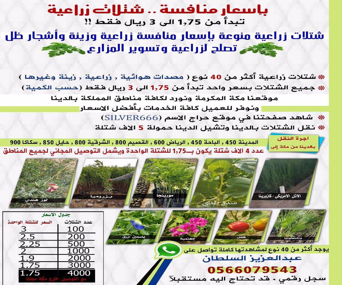 #علا_الفارس_تسيي_للسعوديه Latest News Trends Updates Images - alsultan_shatla