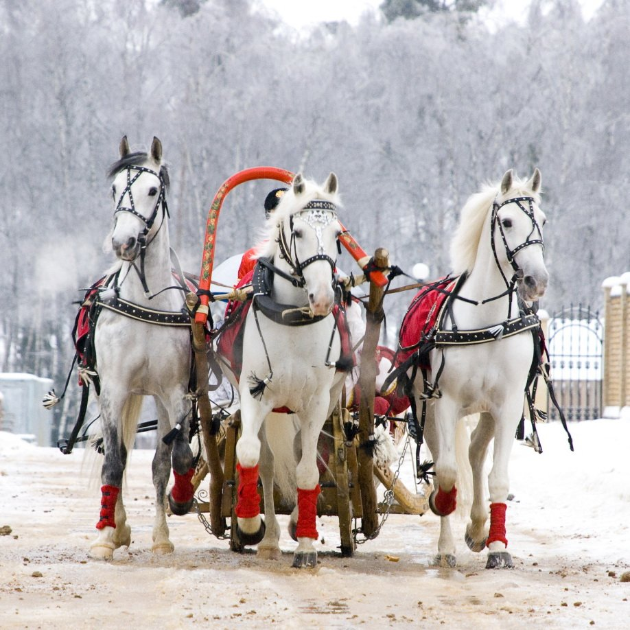 Картинка лошади в упряжке