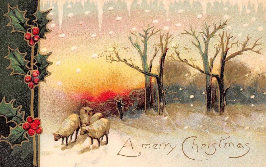 Tonight's vintage sheep themed Christmas...