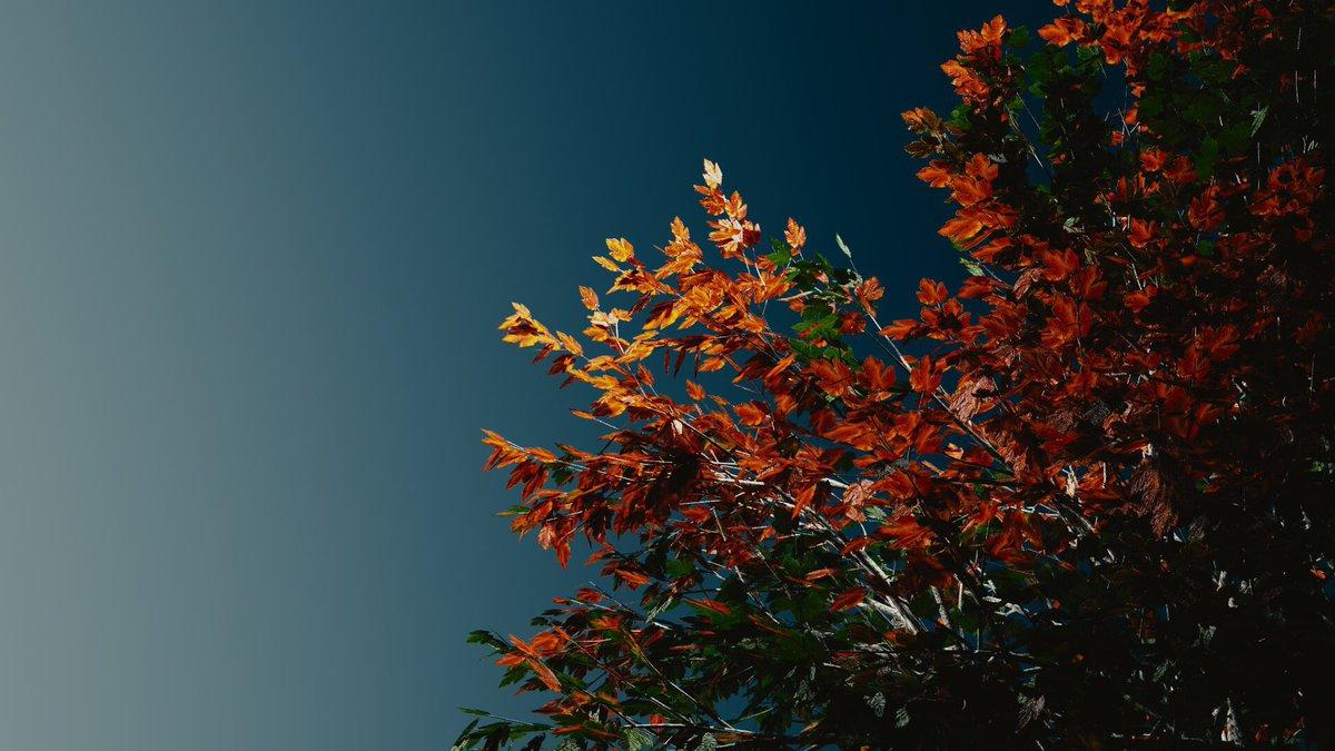 Octeract On Twitter Myart 3dmodeling Blender B3d 3dmodel Tree Art Wallpaper Aesthetic Artistsontwitter Nature Leafs