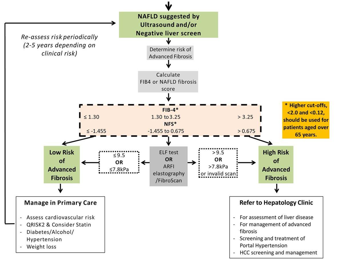 función hepática de la diabetes