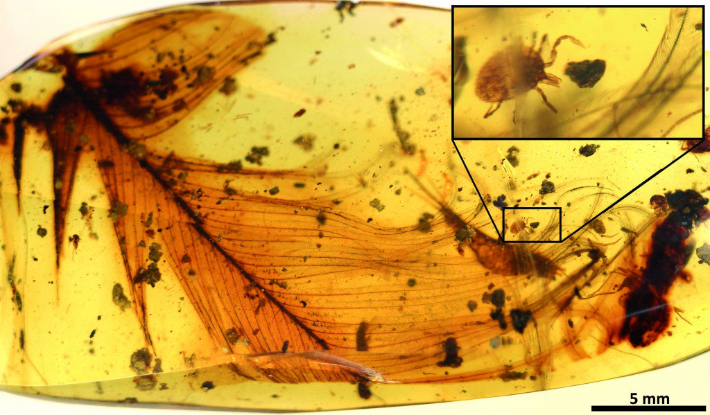 A dinosaur feather trapped in amber has an extra surprise — an ancient tick: https://t.co/K0AloifXRy @GemmaTarlach