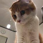 勝手にカメラロールに保存されてた。自撮りしたのか…!? pic.twitter.com/URwTo5…