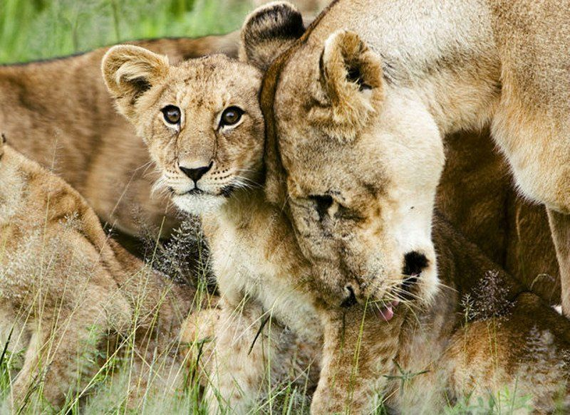 6 Animal Species With Strong Family Bonds https://t.co/9Qiyzi6abf #Animals #Love #Cute