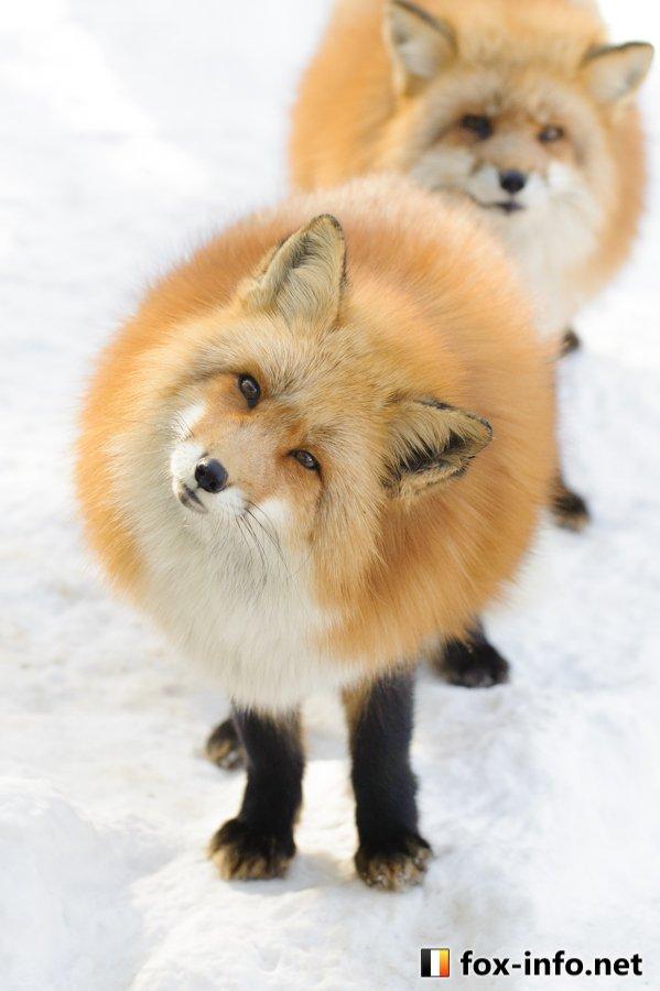 image:@fox_info_net