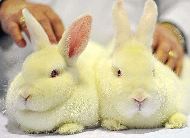 Lei proíbe uso de animais para testes de cosméticos no RJ https://t.co/JdRDj1u6qr