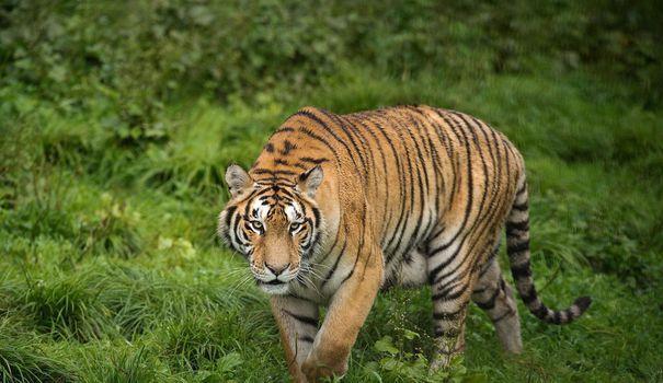 Paris ne veut plus d'animaux sauvages dans les cirques https://t.co/YfLZvMetqK