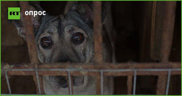 Госдума приняла закон, согласно которому за жестокое обращение с животными можно получить до 5 лет тюрьмы. Одобряете? https://t.co/BuaXBatKyZ