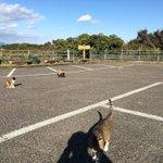 ほーこの駐車場ねこいっぱいおるなー……ねこ………誰だお前 pic.twitter.com/kWnh6…