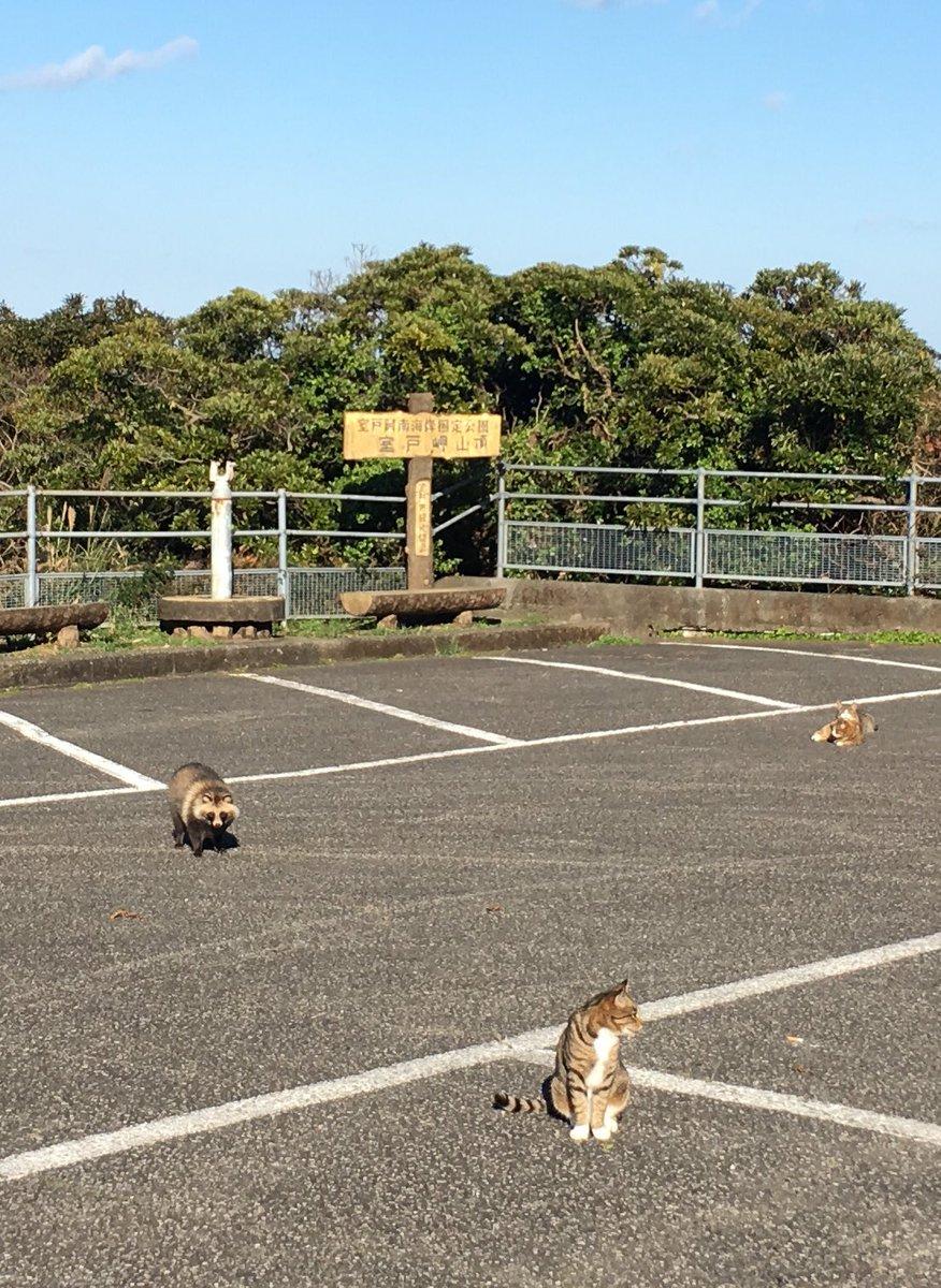 猫がたくさんいる駐車場に異変が?!猫じゃない子が混ざってるww