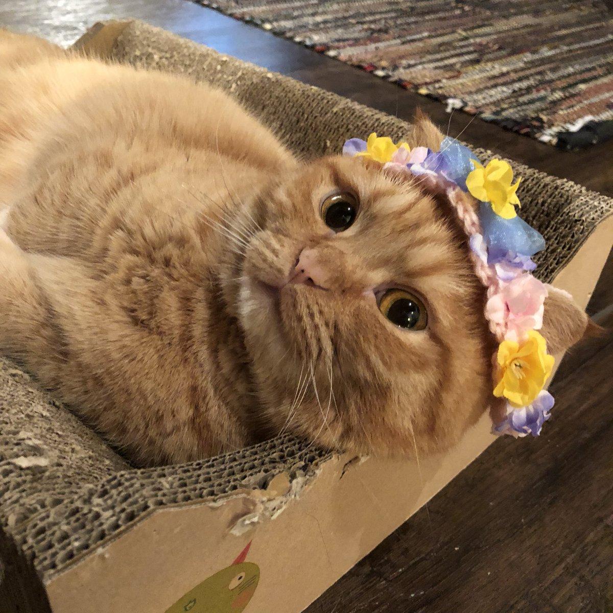 ウニちゃんにお花のティアラを乗せたら、そのうち眠ってしまいました。スヤ…。 pic.twitter.com/K15RtykgdE