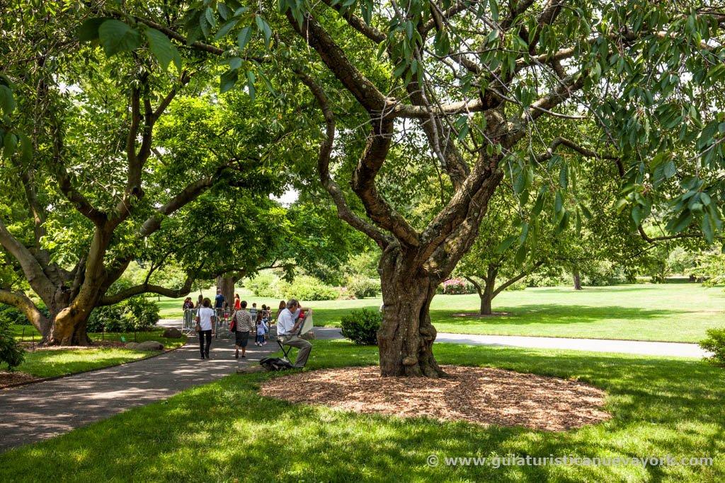 Assez Brooklyn Botanic Garden (@bklynbotanic) | Twitter JW93