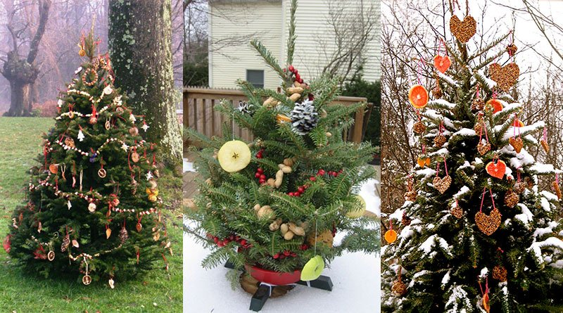 Today why not create an outdoor christmas tree for birds ?! <br>http://pic.twitter.com/tRzwuLtwuu