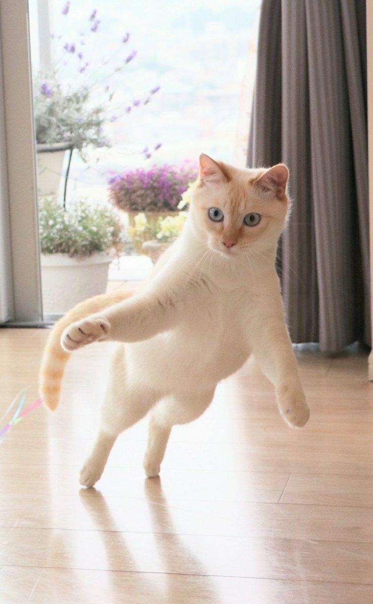 保護猫 #猫 #ねこ #cat #猫好きさんと繋がりたい #笹かま猫 #飛ぶ猫 #ジャンプ猫 #チャコたん  #アニマルエイド出身pic.twitter.com/kMrYBI9rV9