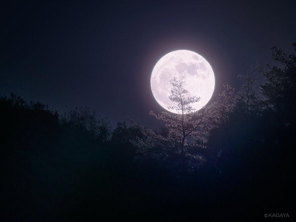 空をご覧ください。 東に今年最後の満月が昇りました。今年一番大きく見える満月なのでスーパームーンとよばれることもあります。(今、埼玉県にて撮影) 次の満月(1月2日)もほぼ同じで大きく見えるのですよ。