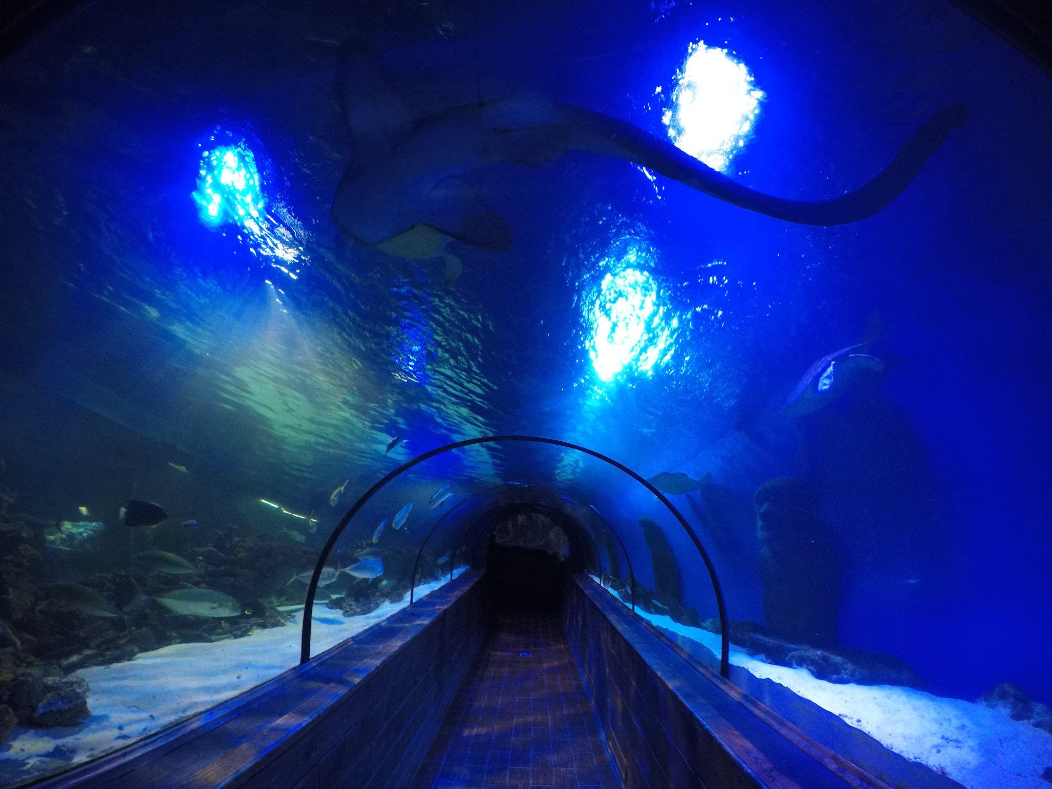 нас картинка подводного моста мире очень много