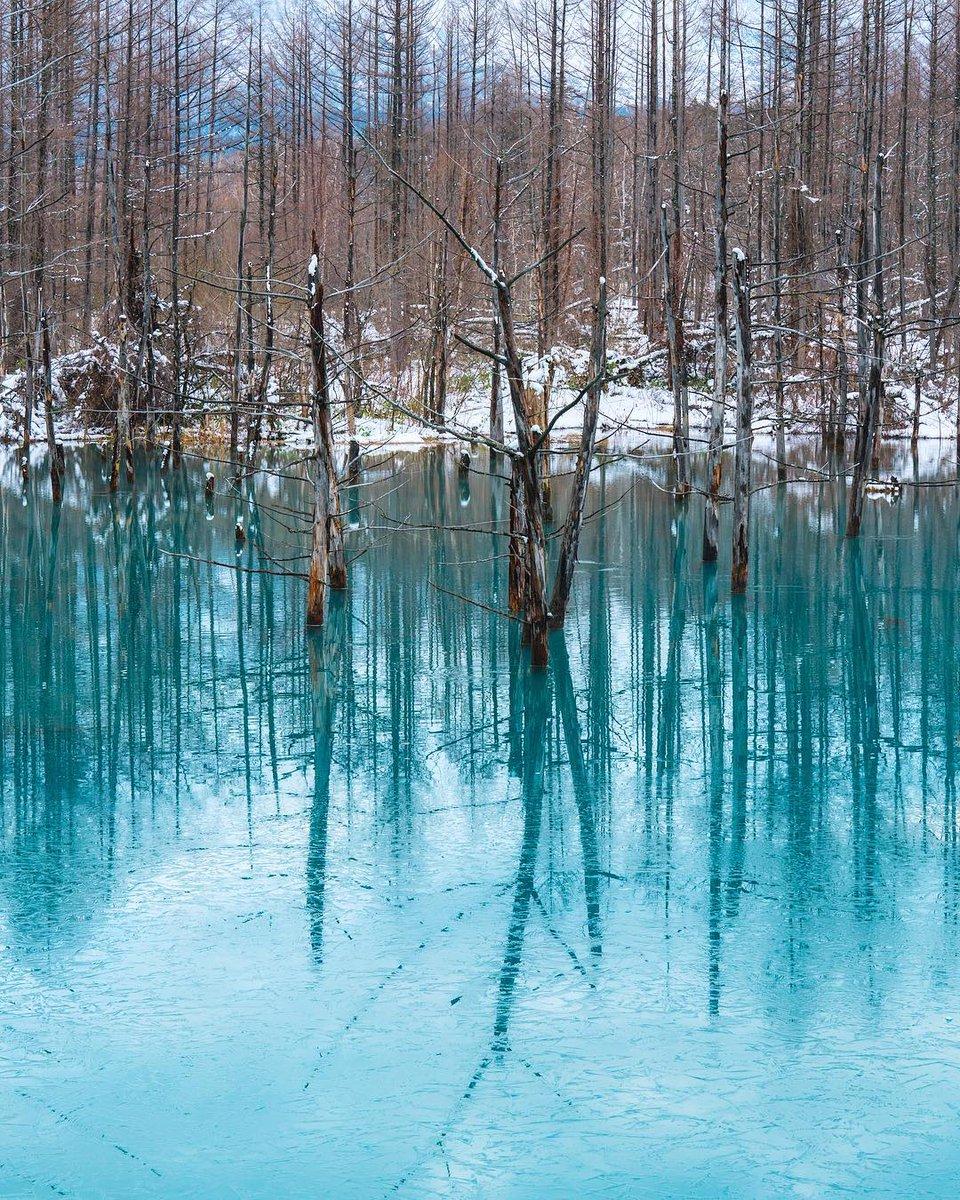 日本に存在する景色とは到底思えない!北海道にある青い池が神秘的〜!
