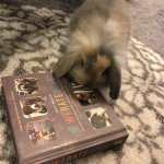 Dogs everywhere LOVE our book! pup stories