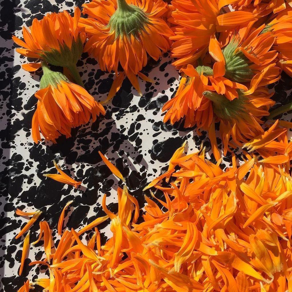 Wild harvesting calendula on the super moon 🌑  #hippiechild 🌕#freespirit #wildharvest https://t.co/QBF9Ig9ZyM