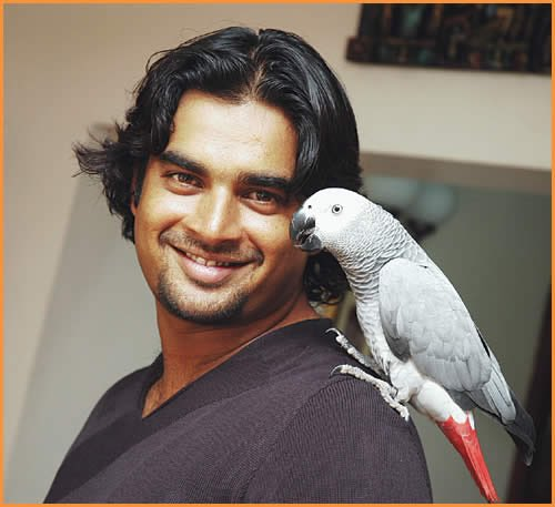 Image result for madhavan parrot