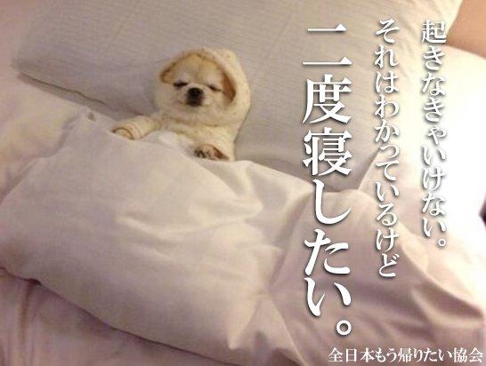 """全日本もう帰りたい協会 on Twitter: """"二度寝したい。… """""""