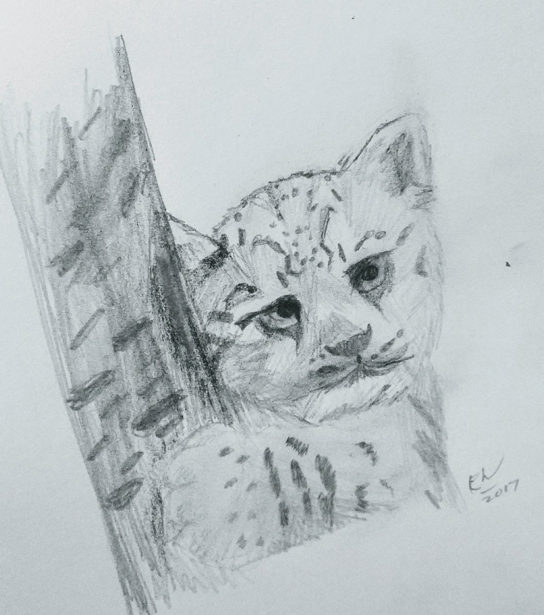 3gհdi On Twitter A Baby Snow Leopard Ethansketches