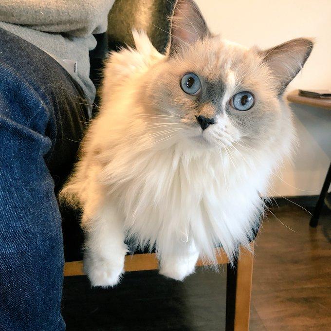 猫 画像 cat image 姫が珍しくおとさんの横。 狭いのに、それがいいのが猫らしい。