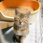 どんなソシャゲも長続きしない僕ですが、『猫』はマジやばいです。すげえ時間吸い取られるし際限なく課金し…