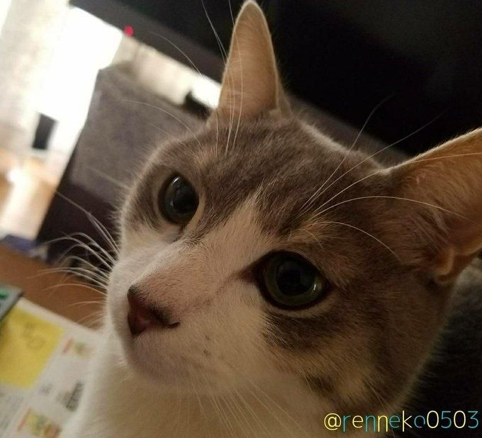 猫 画像 cat image 角度少し変えたらシュッとしたレンに?