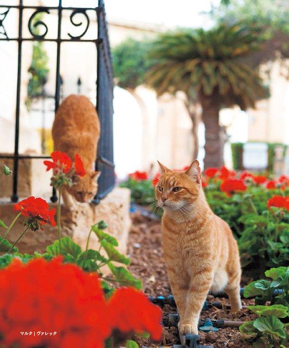 猫 画像 cat image 写真集『世界の街猫』発売、美しい街の風景&そこで暮らす猫たちを特集 -