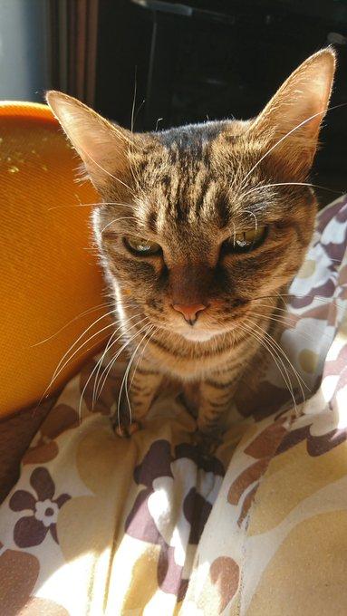 猫 画像 cat image 猫を飼うと人生変わるぞ