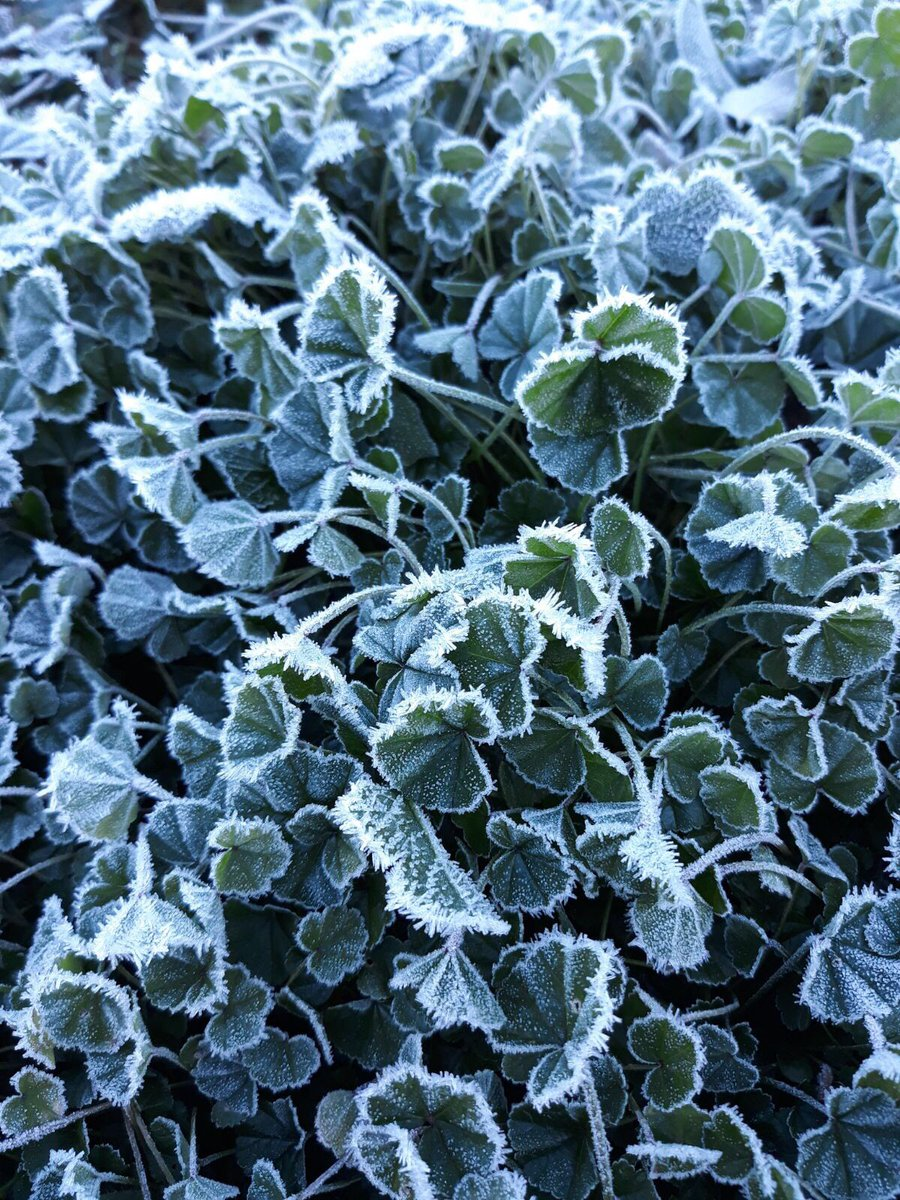 Los fríos de diciembre by @bueno_montero...