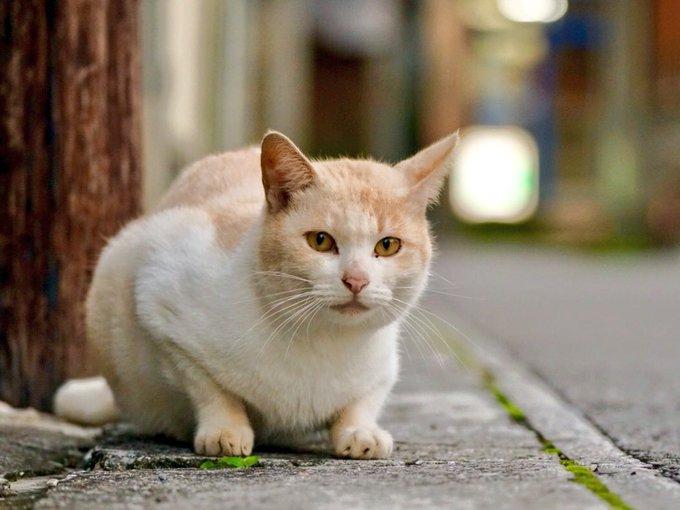 猫 画像 cat image 石垣島の公設市場には、猫。
