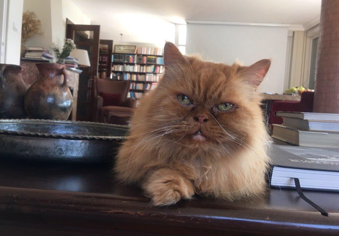 Evde veya kapı önünde, kediyle paylaşılm...