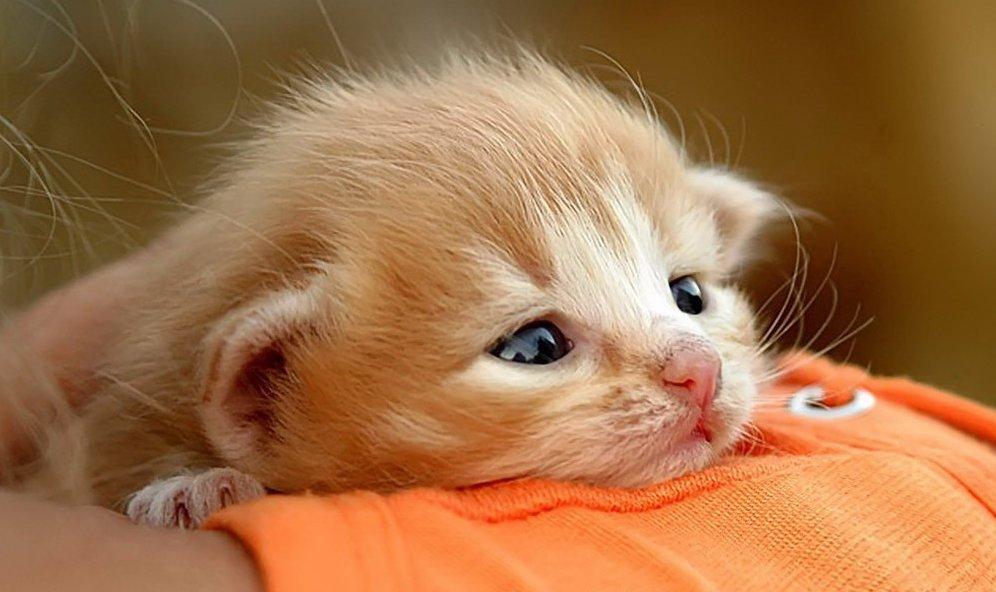 Голограммой, фото с котятами с надписями