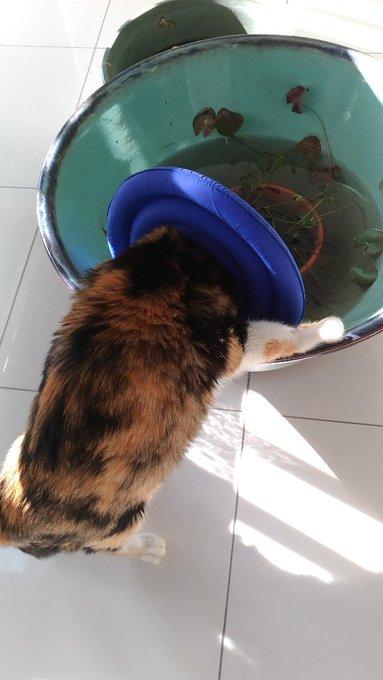 猫 画像 cat image 水平に広がる波紋に対して垂直に広がる猫の波紋として交わることにより、宇宙に新な健全な日本国を生じせしめんとする試みなのである。