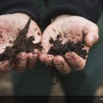 Today let's celebrate one of the planet's most vital, yet often overlooked, environmental resources... https://t.co/hxmytGtutZ #WorldSoilDay