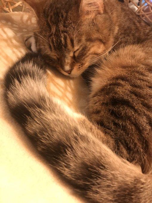 猫 画像 cat image 嗚呼…猫を飼いたい。 サンタ様、今年のクリスマスプレゼントはにゃんこ様なんて如何でしょうか?【祐矢】