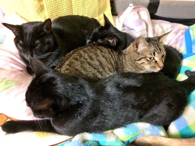 猫 画像 cat image やっぱりトラ猫、守られてる。