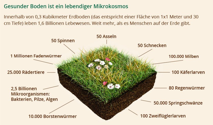 Grafik Bodenbewohner: Gesunder Boden ist ein lebendiger Mikrokosmos Innerhalb von 0,3 Kubikmeter Erdboden (das entspricht einer Fläche von 1x1 Meter und 30 cm Tiefe) leben 1,6 Billionen Lebewesen. Weit mehr, als es Menschen auf der Erde gibt.
